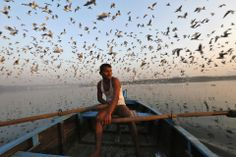 Birds flew above a man rowing a boat in the Yamuna River in Old Delhi Tuesday. (Mansi Thapliyal/Reuters)