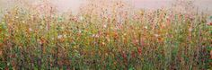Abstracted impressionist floral painting. Maybe I need to get out in my garden and do some weeding and cutting back, I love the wonderful colours at the moment though. The sun filtering all those l...