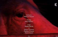 Intéressant documentaire de Mathurin Peschet sur une population largement majoritaire dans la région ( 5 cochons pour 1 breton ), nos cousins les cochons. Le réalisateur assume sa position de « gars de la Ville » qui n'y connaît pas grand-chose, le film prend son temps et adopte un point de vue assez large ; avec M.Pastoureau en guest-star. Rediffusion sur FR3 Bretagne Lundi 14 Septembre à 8:45