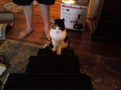 Climbing her stairs that Matt made for her :)  She loved them!