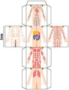 Rompecabezas en cubo del cuerpo humano Hola estimados lectores de su portal Diario Educación, en esta ocasión me emociona compartir este material con ustedes ya que me llevó unas buenas horas de trabajo poder elaborarlo, se trata de un rompecabezas en cubo sobre los sistemas y aparatos del cuerpo humano, este material para ciencias naturales …