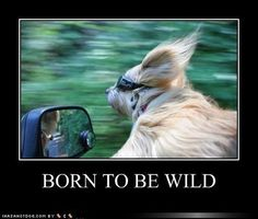 Born to be wild - let the wind blow thru your hair....