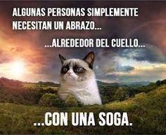 Resultado de imagen de grumpy cat meme español