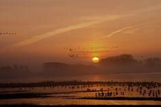 Zonsopkomst Zeeland Sunrise Plan Tureluur Bedandbreakfastbrouwershaven.nl