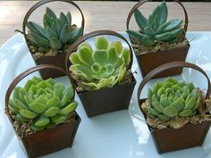 Succulent Wedding Favor, via Etsy.