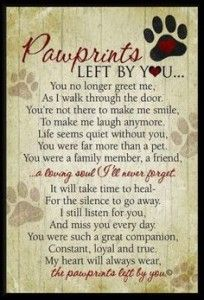 Grieving the loss of a pet - read this blog