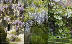13 wisterias that will fill you with the joys of spring