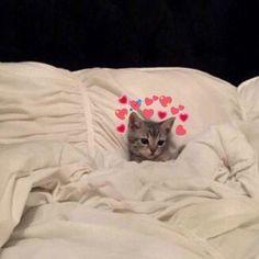 Memes apaixonados gatos New ideas Cute Cat Memes, Cute Love Memes, Funny Cats, Baby Animals, Funny Animals, Cute Animals, I Love Cats, Cool Cats, Image Originale