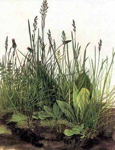 Durer - Tall Grass, Great Piece of Turf