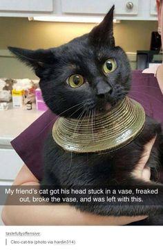 Cleo-cat-tra
