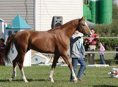 Don - photos - equestrian.ru