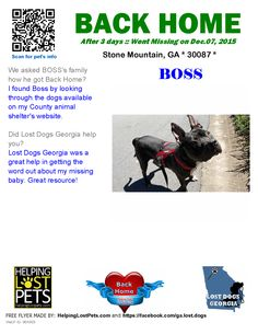 Helping Lost Pets | Dog - Pit Bull Terrier - Back Home