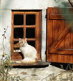 "umla: ""guarding the window"" (by Cyril Marchand — REDBUBBLE)"