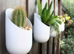 Small container garden; great for succulents!