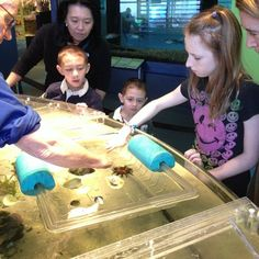 Touch Tank Museums, School Ideas, Shark, Liberty, Aquarium, Social Media, Science, Touch, Instagram
