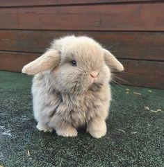 Great potography with cute bunnies - Süße Tiere - animals Baby Animals Super Cute, Cute Baby Bunnies, Cute Little Animals, Cute Funny Animals, Baby Farm Animals, Funny Dogs, Baby Animals Pictures, Cute Animal Pictures, Fluffy Animals