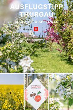 AUSFLUGSTIPP THURGAU: Die Bluescht-Saison im Thurgau bedeutet ein Meer an Blüten. Denn hier wird ein Grossteil des Schweizer Obst angebaut. Apfel, Kirsch, Birnen u.v.m.  Tipps für die Region: der Apfelweg in Altnau, das Bluescht-Fest oder eine Übernachtung im Bubble-Hotel. Reisen In Europa, Table Decorations, World, Travel Inspiration, Ruins, Pony Rides, European Travel, The World, Dinner Table Decorations
