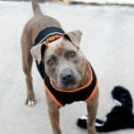 ROUGE - A1091129 - TO BE DESTROYED TODAY - FRIDAY - 10/14/16 - AVAILABLE AT BROOKLYN ACC.