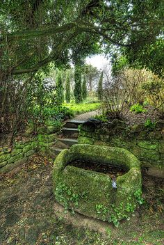 Witch Garden: #Witch #Garden ~ a water trough, with a few goldfish swimming around.