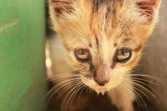 love miaaw