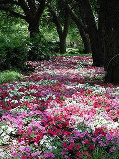 Carpet of pink and white flowers.