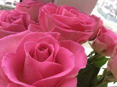 #flowers #rouse #follow #YuliaFigol It is a beautiful