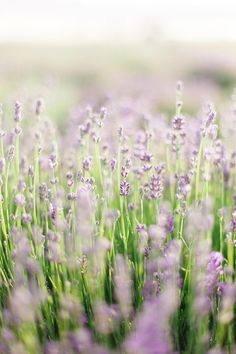 Ethereal Wedding Dress Inspiration in a Lavender Field #flowyweddingdresses #purpleweddingflowers #modernweddingcakes