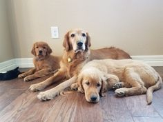Mom with her 12 week old boys! #dogpictures #dogs #aww #cuteanimals