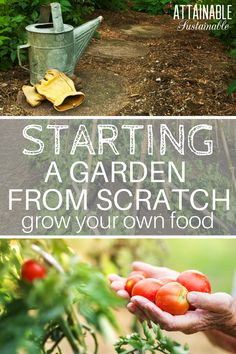 Ready to plant your own garden? Here's how to start a vegetable garden from scratch so you can begin harvesting food.