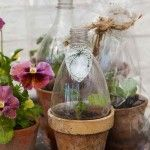 Upcycled soda bottle over a terracotta pot makes a wonderful tiny green house perfect for seed starting