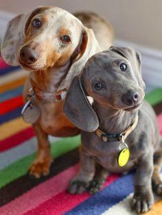 5 Puppies looking super sweet