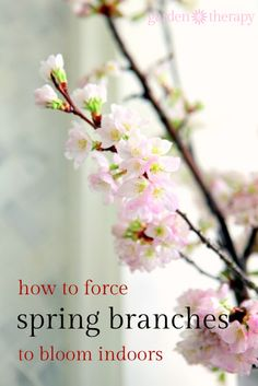 Forcing spring branches is simple! from How to Force Spring Blanches to Bloom Indoors