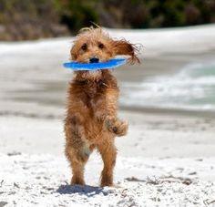 #PANDORAsummercontest Play Frisbee
