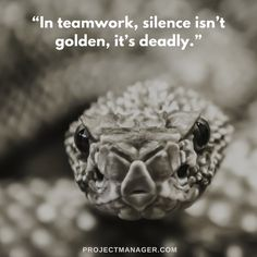 """In teamwork silence isn't golden it's deadly."""" – Mark Sanborn Teamwork Quotes Inspirational and Sayings with Images Inspirational Teamwork Quotes, Motivational Gifts, Working Together, Together We Can, John Maxwell, Life Quotes Love, Book Quotes, Bill Gates, Good Teamwork"""