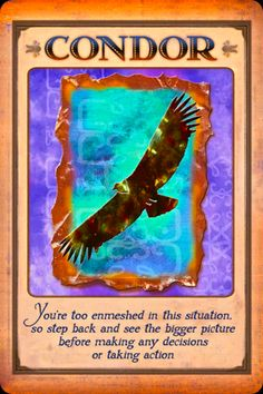 """Daily Angel Oracle Card, from the Messages From Your Animal Spirit Guides Oracle Card deck, by Stephen D Farmer: Condor Condor: """"You are too enmeshed in the situation, so step back and see the bigg..."""