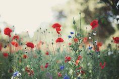 wildflowers in field by Alice Gao
