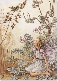 The Stork's-Bill Fairy. Vintage flower fairy art by Cicely Mary Barker. Taken from 'Flower Fairies of the Wayside'. Click through to the link to see the accompanying poem. Cicely Mary Barker, Silk Ribbon Embroidery, Embroidery Stitches, Embroidery Patterns, Embroidery Books, Embroidered Silk, Machine Embroidery, Embroidery Supplies, Embroidery Techniques