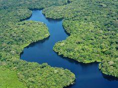 Amazônia Com impressionantes 5,5 milhões de quilômetros quadrados, a Floresta Amazônica é a maior floresta tropical do mundo. O desmatamento gerado pela expansão da agricultura e pecuária e construção de estradas fez com que a área total desmatada da floresta crescesse de 415.000 para 587.000 quilômetros quadrados entre 1991 e 2000.