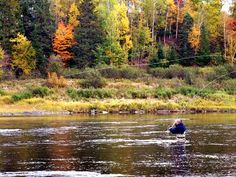 trout fly fishing canada - Google Search