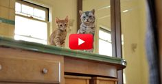 Yes, This Is A Friskies Commercial. But Trust Me, It's Hilarious. | The Animal Rescue Site Blog