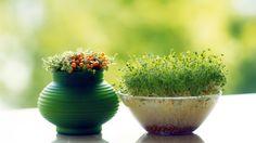 Домашний огород: хитрости по выращиванию овощей в квартире 0