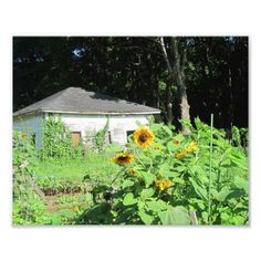 Country Shed Photo Print