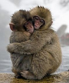 soul food, anim, picture quotes, hug, monkeys, thomas merton, thought, inspir, hot spring