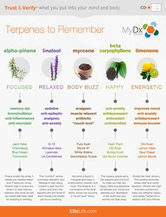 Terpene Chart | #ClinicalCannabisCare #1Cure4Cancer