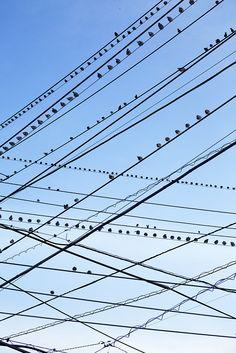 By Yoshinori Mizutani ~ power lines