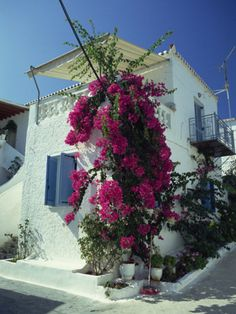 lee-frost-bougainvillea-on-a-white-house-on-the-island-of-spetse-greek-islands-greece-europe.jpg (366×488)