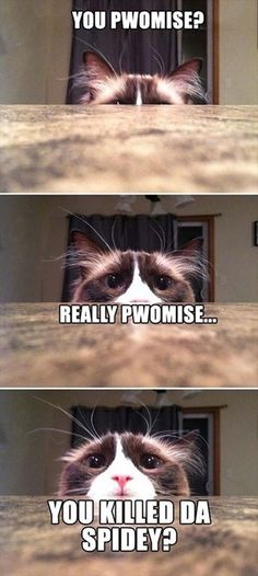 I personally love memes and funny cat memes are my personal favorite. Who could resist adorable images of cats, dogs, and other animals next to a funny tagline? Cat Memes To Make You Laugh Until You Cry! Funny Animal Quotes, Animal Jokes, Cute Funny Animals, Cute Baby Animals, Cute Cats, Funny Quotes, Animal Captions, Humor Quotes, Memes Humor