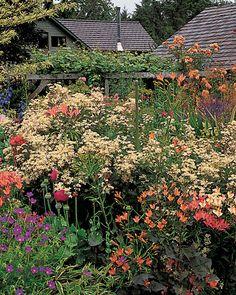 This garden gets its color from various English hybrid delphiniums, orange Alstroemeria Ligtu, blue Geranium Nimbus, and white-flowering Clematis recta Purpurea.