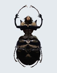 Insectes photography by Laurent Seroussi
