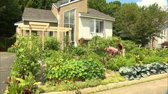 Authorities Seek to Destroy Couple's Edible Landscape. Seeing quite a bit of this online. I think one of the problems is growing too much and things that get overgrown looking.  I think there are ways of using flowers and edibles that won't trigger complaints. Don't make it look like a farm! Don't wave a flag saying I'm an urban farmer!